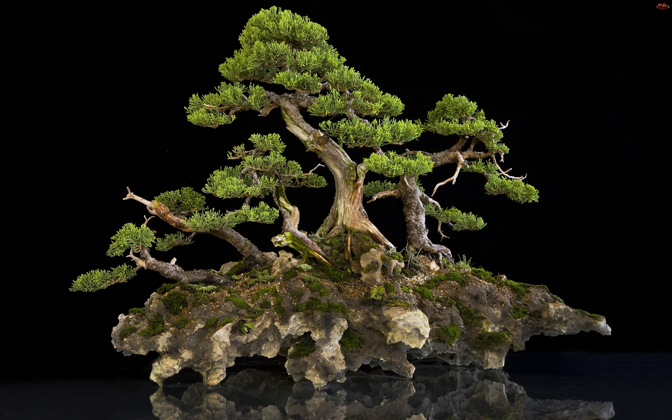 Miniaturka, Drzewo, Skale, Na, Bonsai