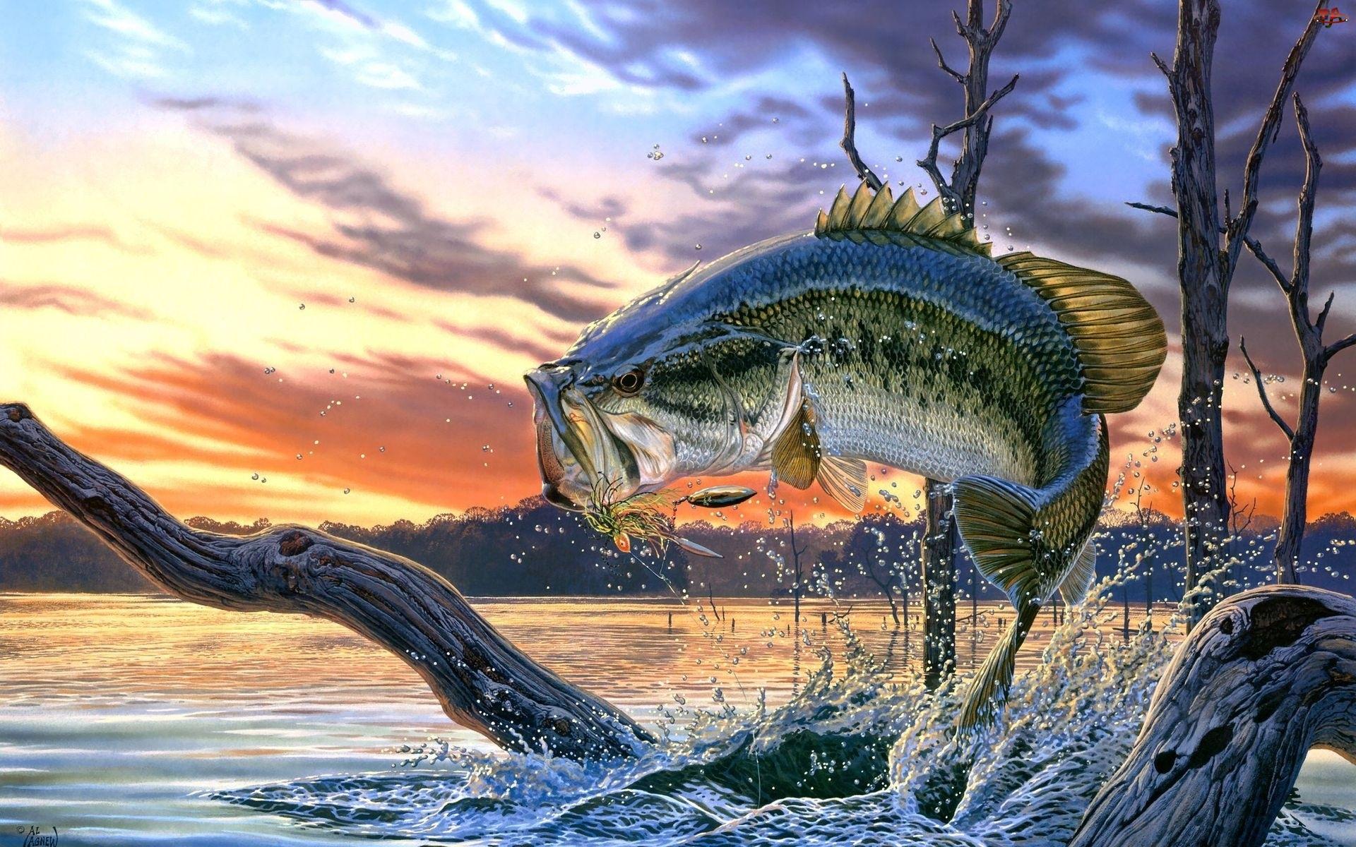 Ryba, Drzew, Woda, Korzenie