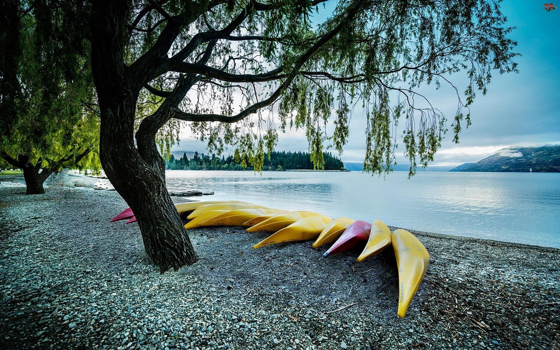 Łódki, Jezioro, Drzewo
