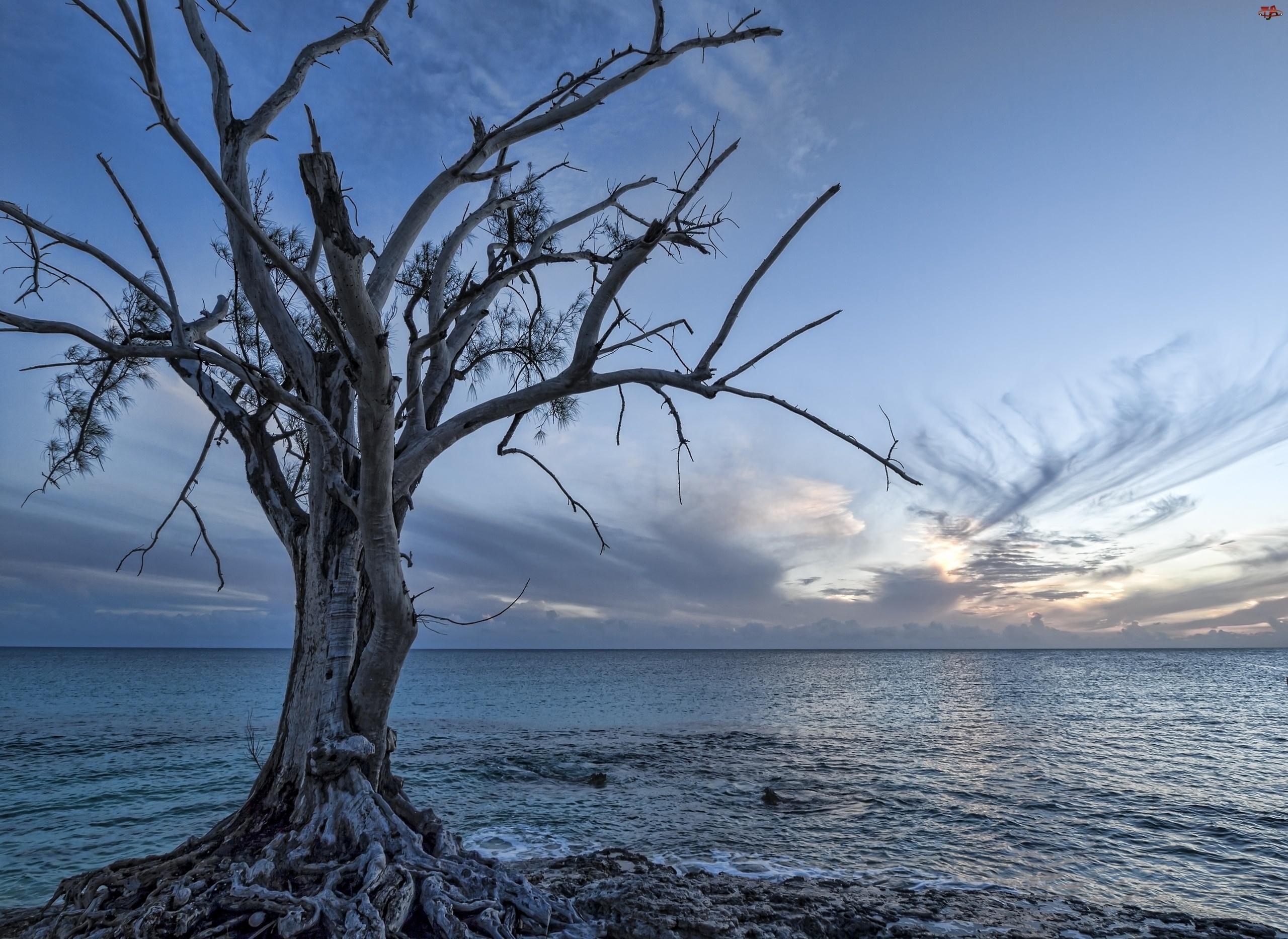 Horyzont, Morze, Drzewo