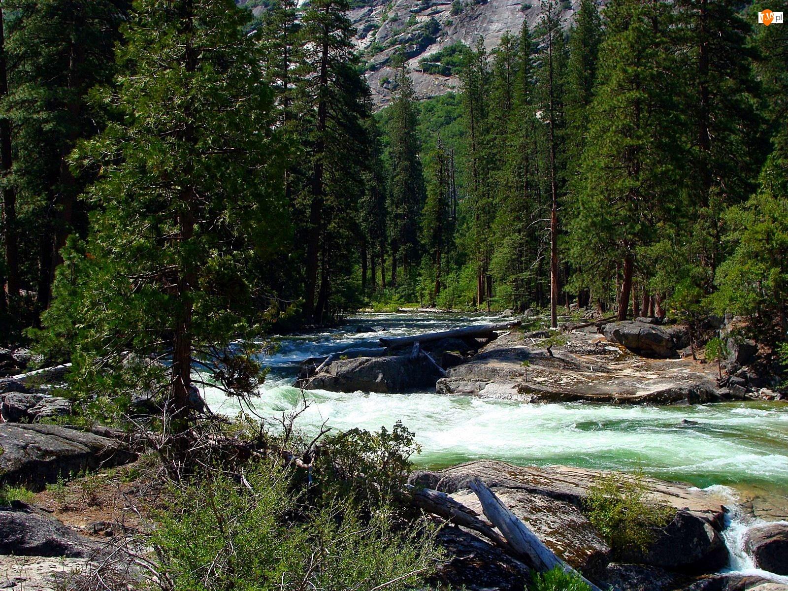 Las, Kalifornia, Rzeka, Park Narodowy Yosemite