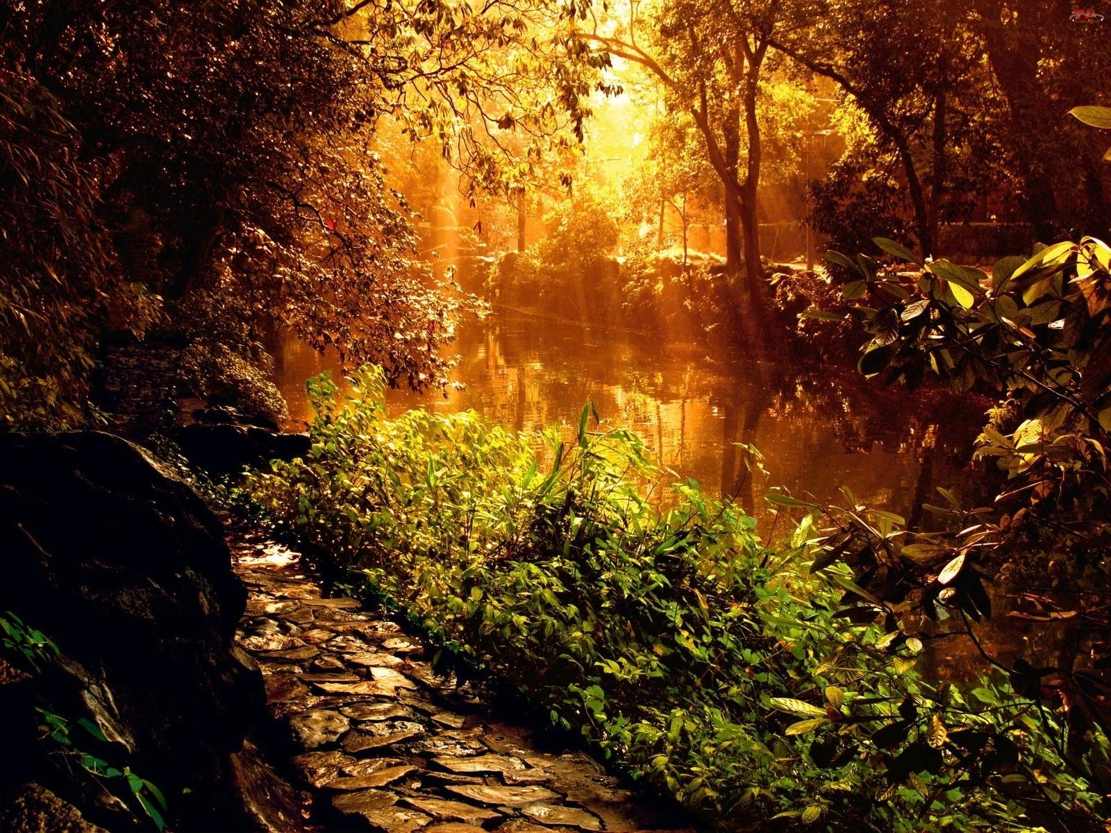Leśna, Słońca, Rzeka, Promienie
