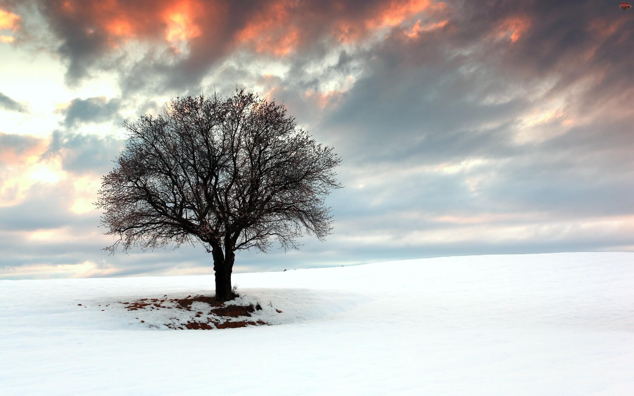 Zima, Drzewo, Słońca, Zachód, Śnieg