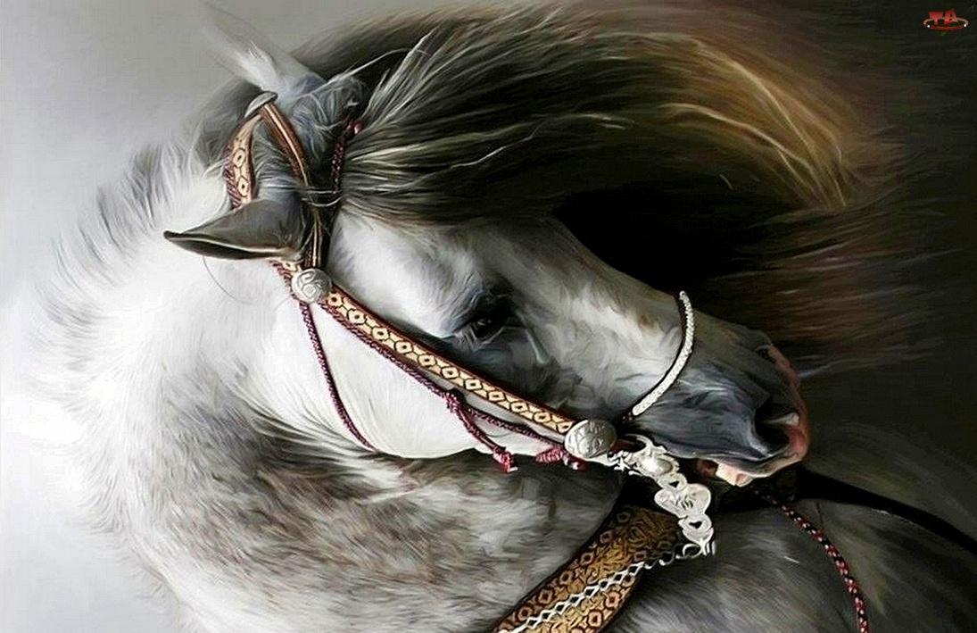 Głowa, Konia