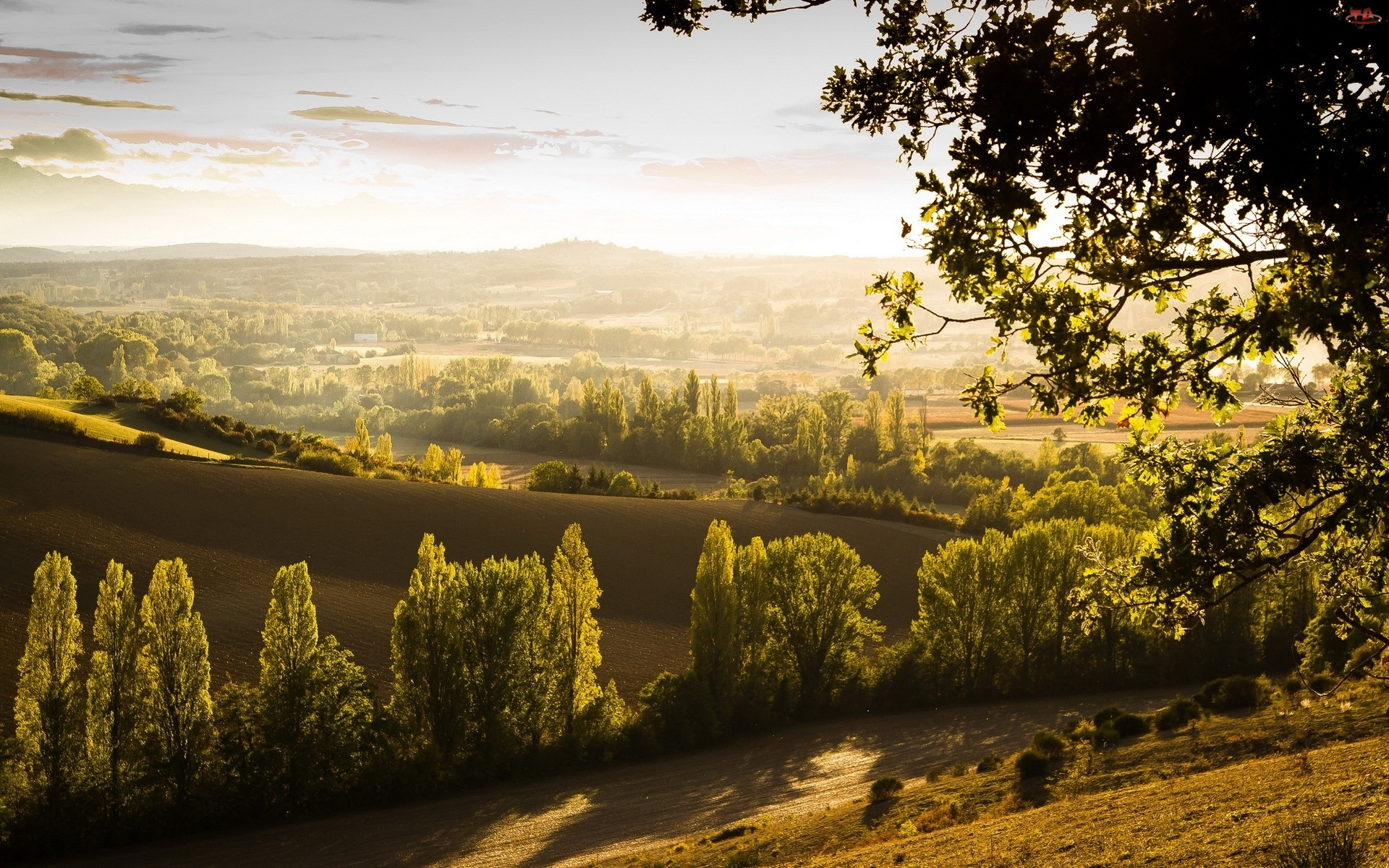 Pola, Panorama, Droga, Drzewa