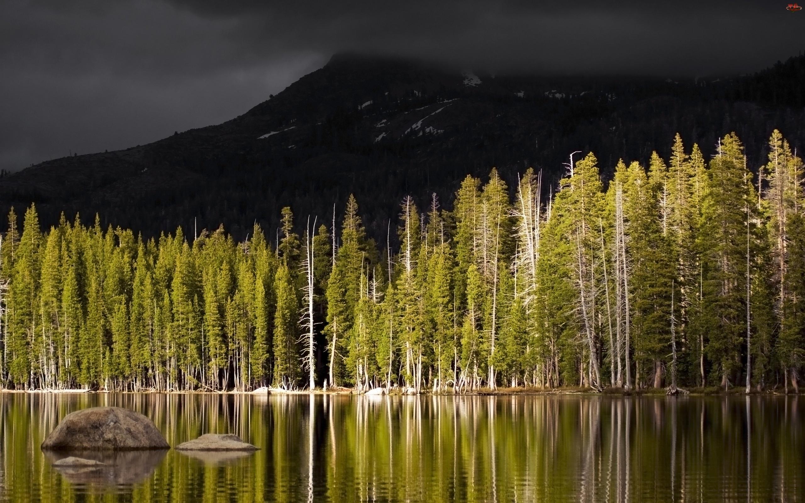 Jezioro, Góry, Las