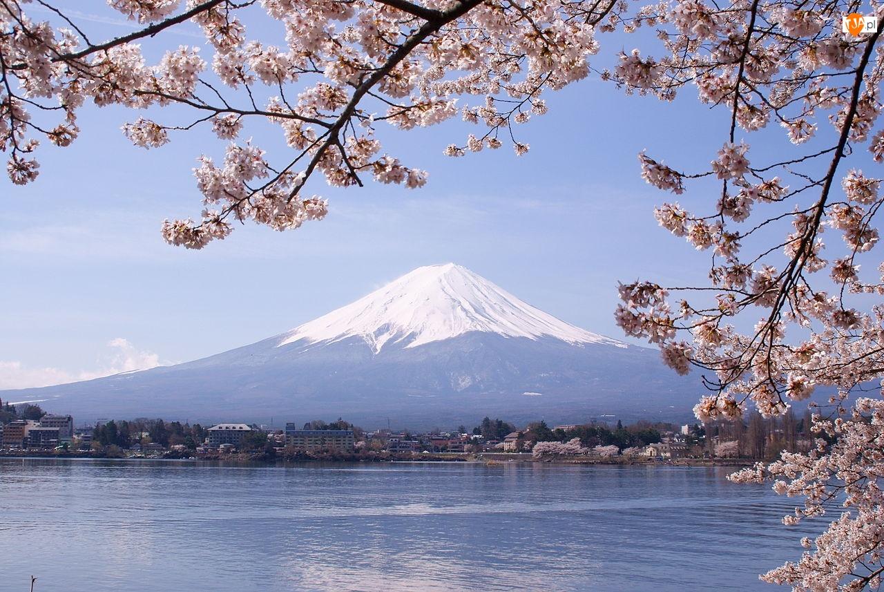 Gałązki, Fuji, Jezioro, Japonia, Kwitnące, Góra