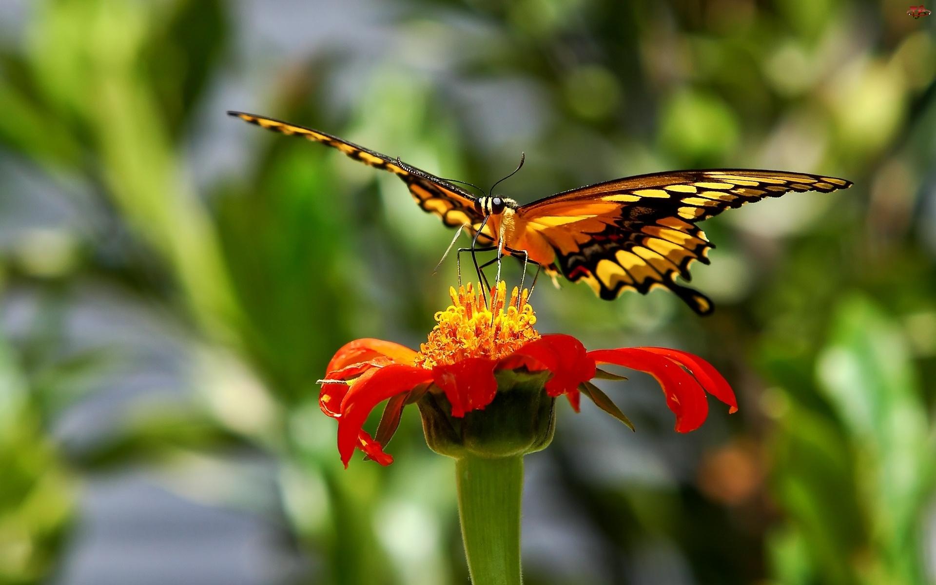 Kwiat, Motyl