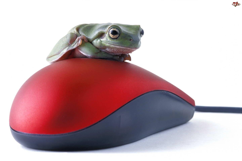 Żabka, Mysz, Komputerowa