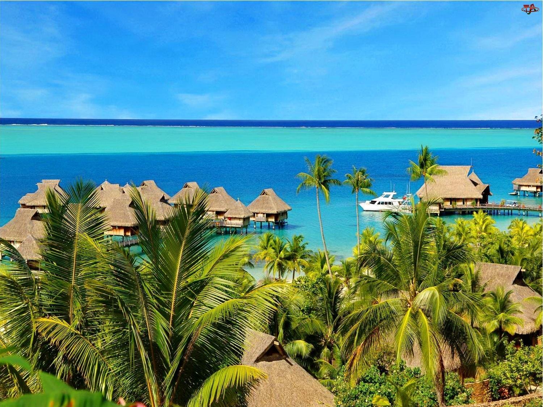 Tropik, Ocean, Palmy