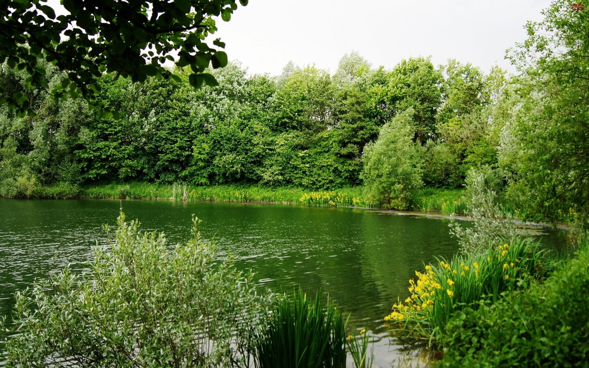 Rzeka, Kwiaty, Drzewa, Krzewy