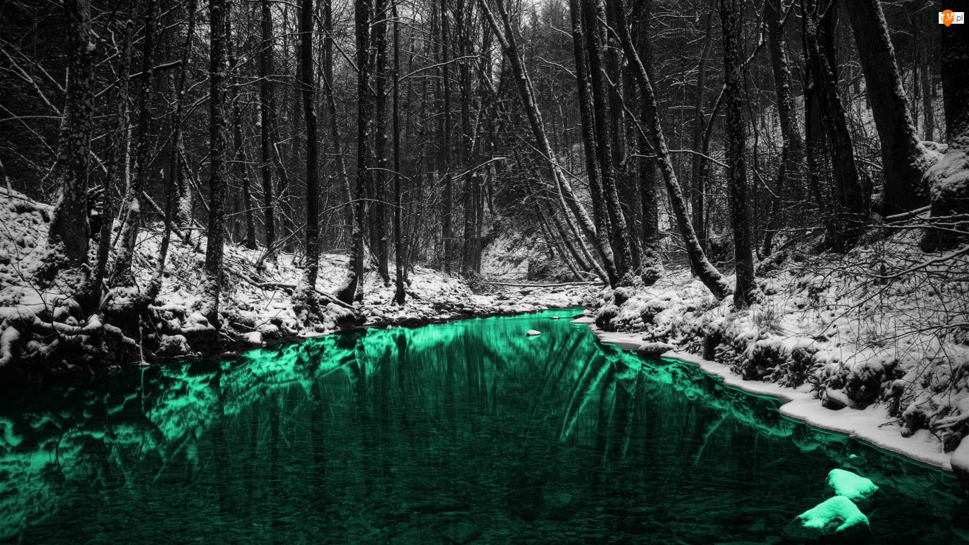 Rzeka, Las, Zielona