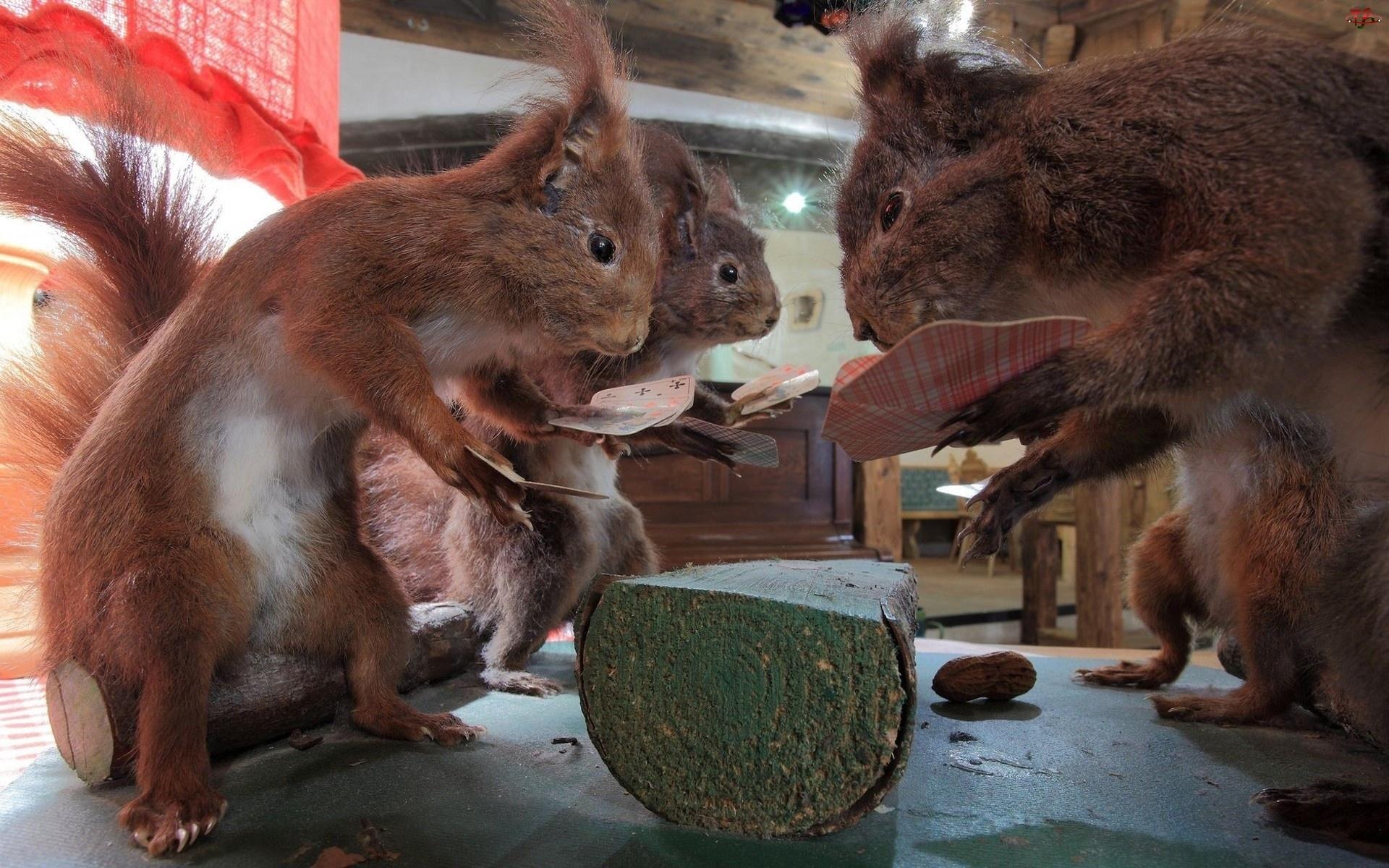 Wiewiórki, Orzeszki, Gra, Karty