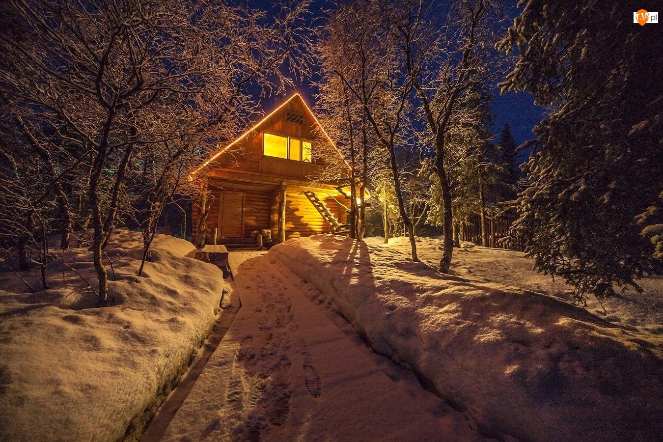 Zima, Domek, Drzewa