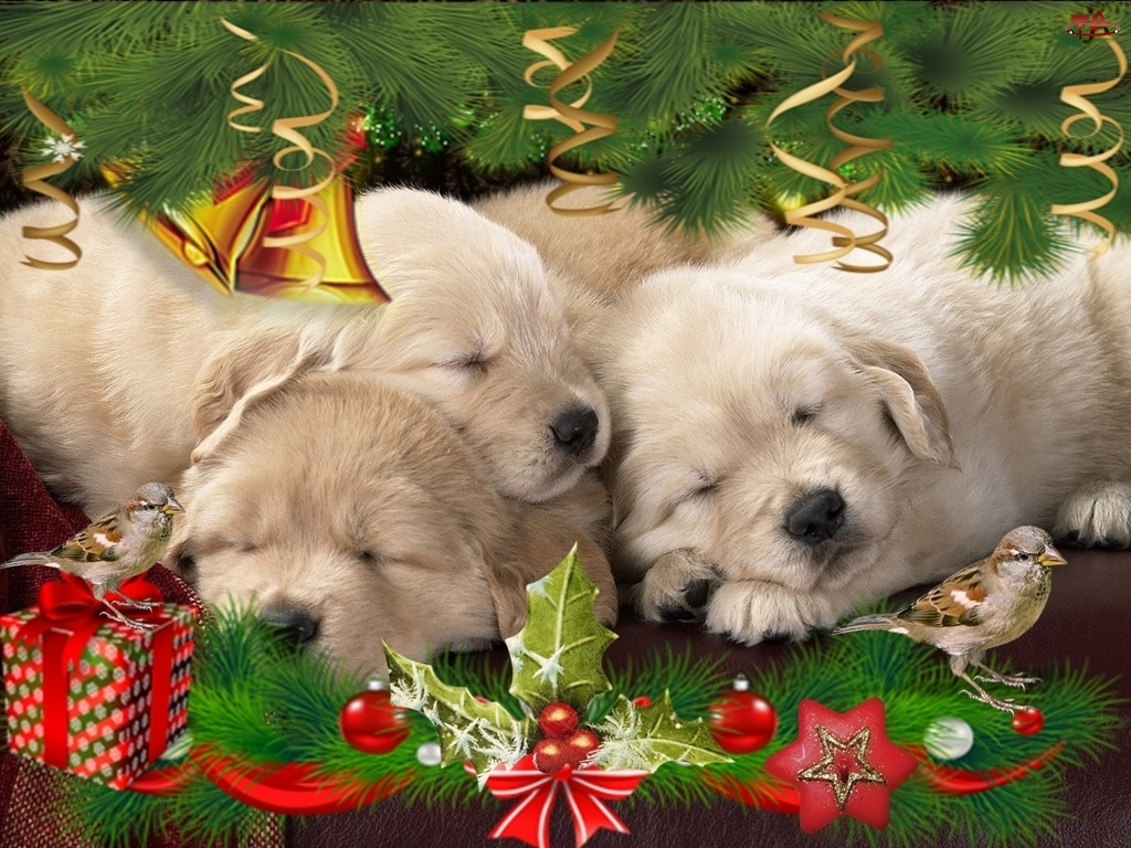 Szczeniaczki, Święta