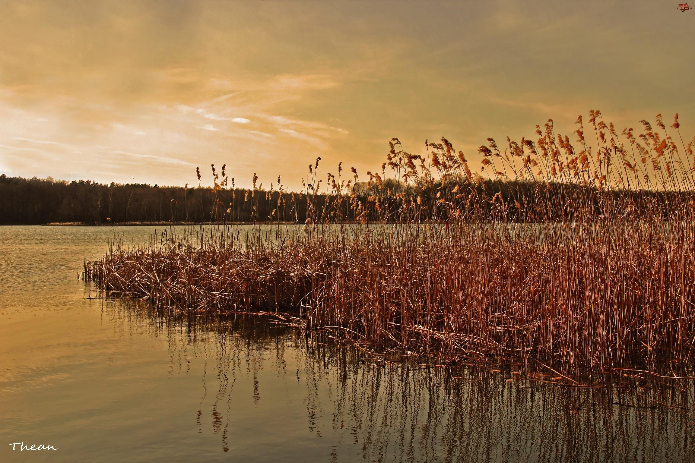 Jezioro, Trzcina