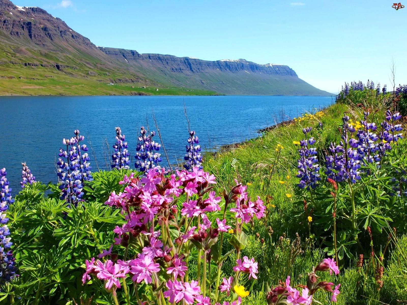 Łąka, Góry, Kwiaty, Rzeka