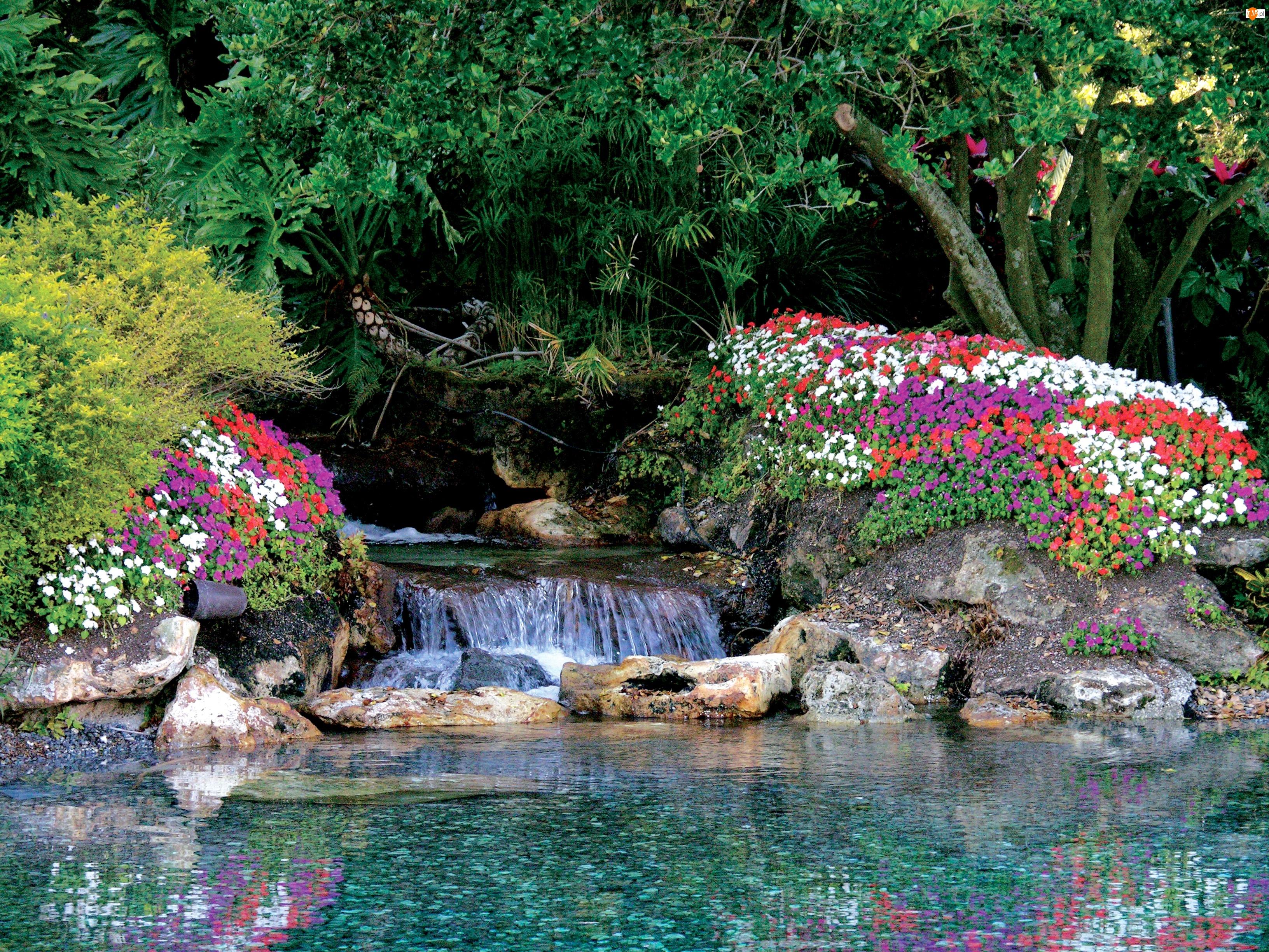 Drzewa, Wodospad, Kwiatki