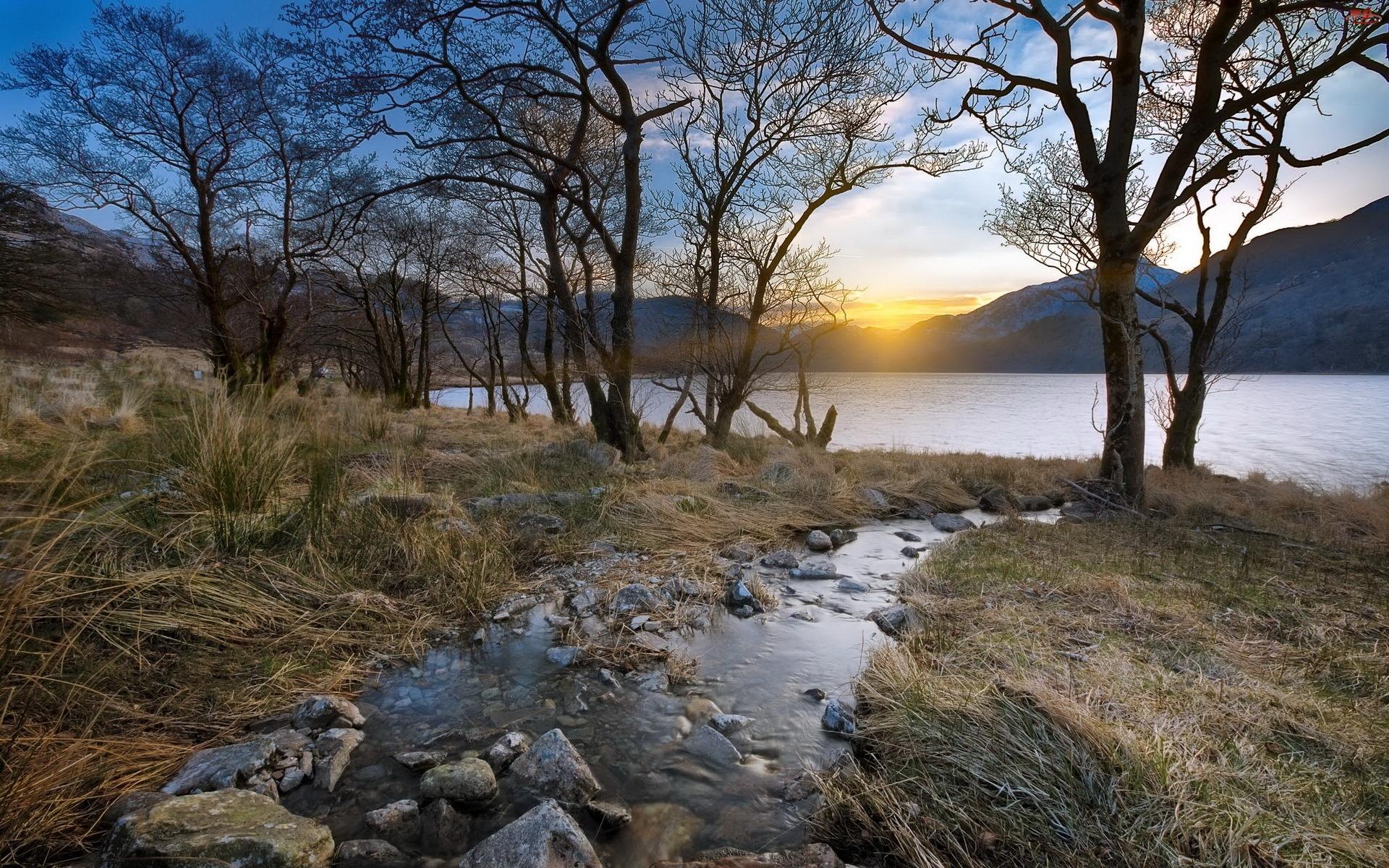 Drzewa, Wschód, Jezioro, Słońca, Strumyk