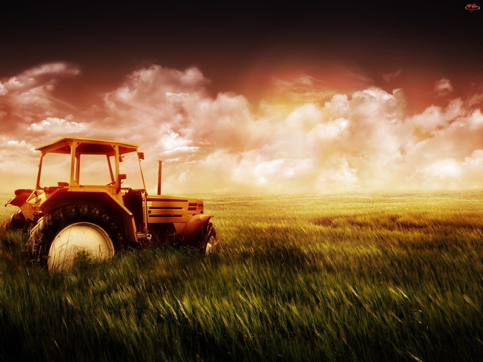 Traktor, Zboża, Pole, Łany
