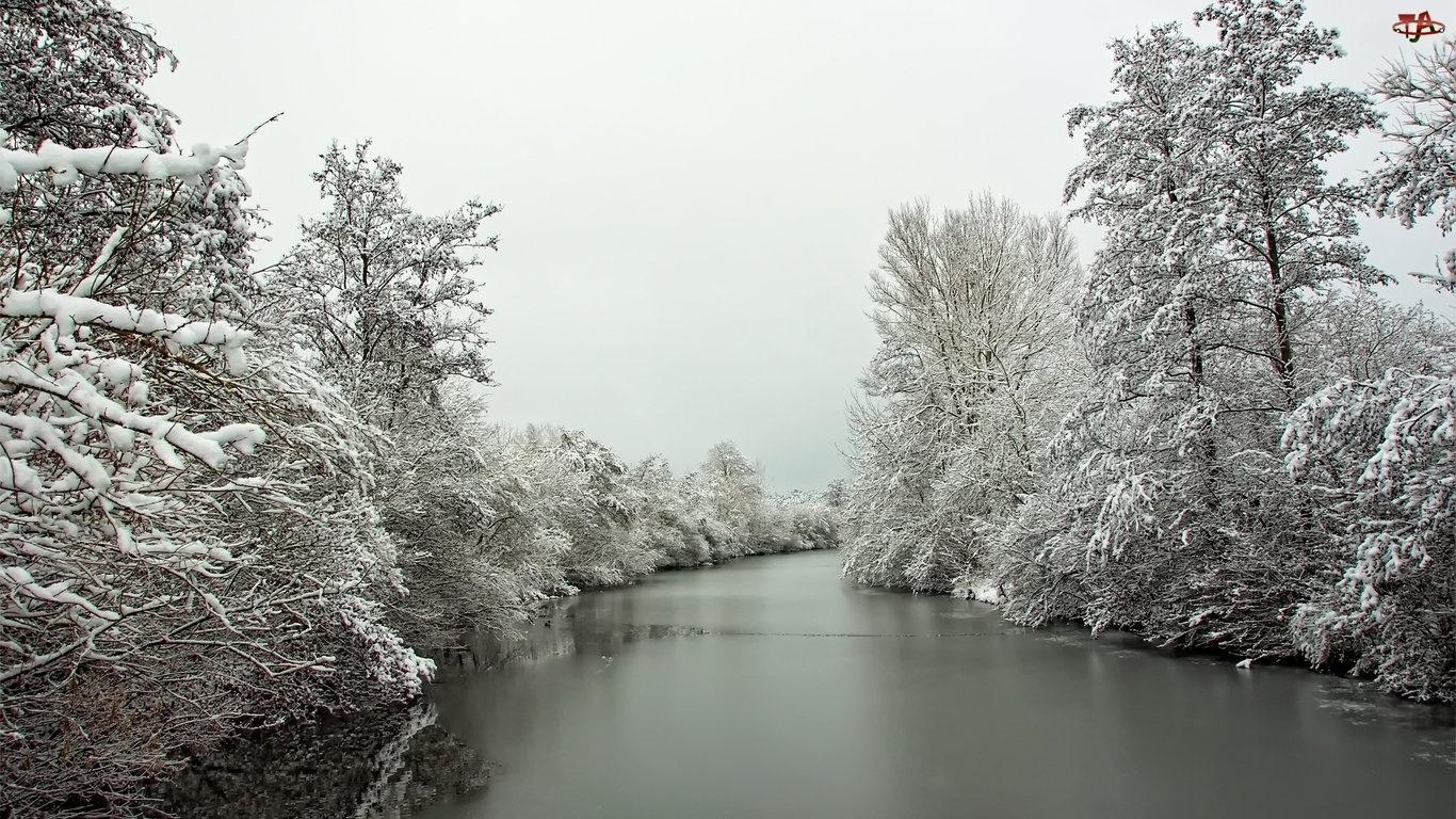Zima, Drzewa, Rzeka, Oszronione