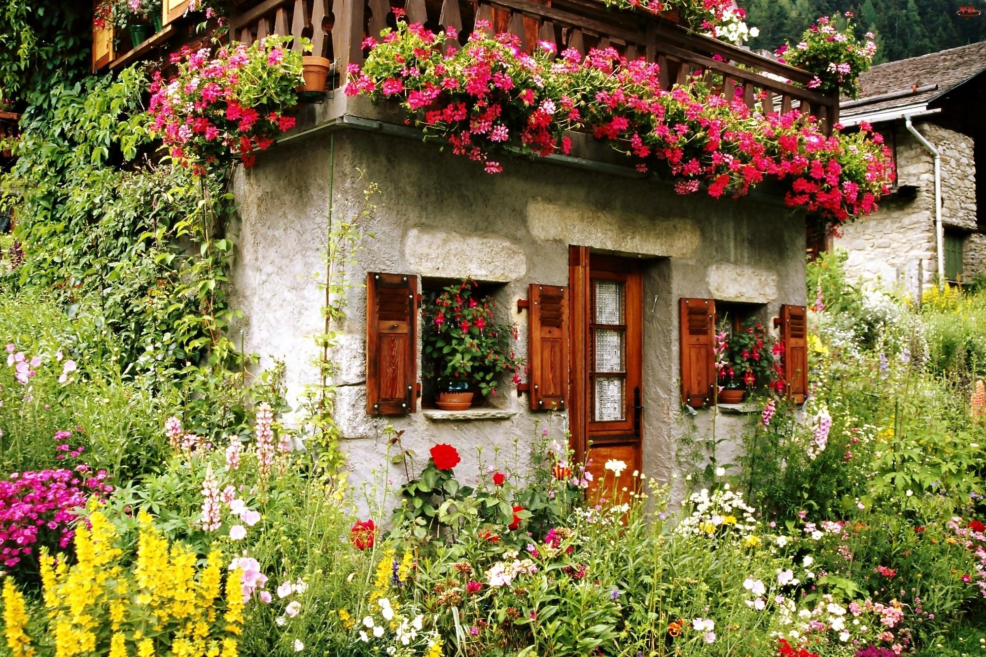 Ogródek, Bluszcz, Kamienne, Pelargonie, Domki, Kwiatowy
