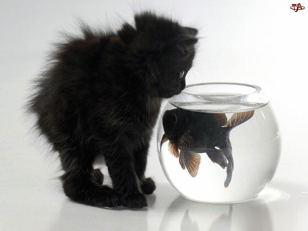 Akwarium, Kot, Rybka