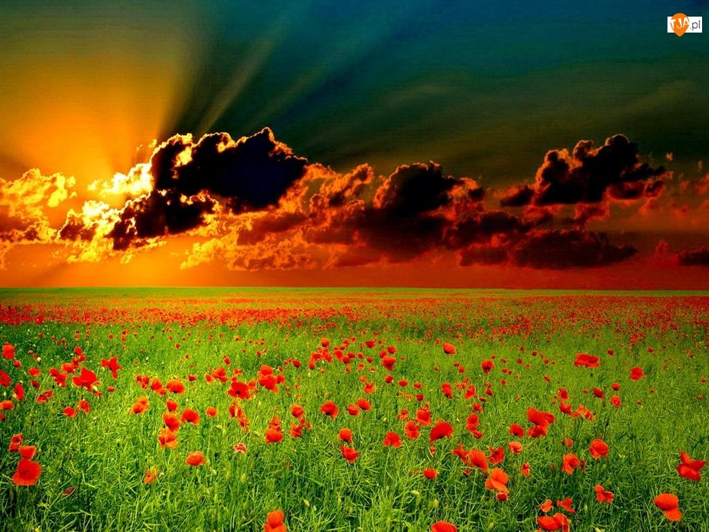 Zachód, Maki, Słońca, Chmury