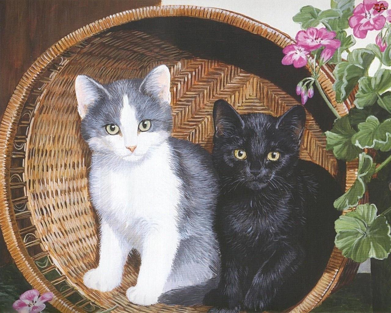 Pelargonie, Dwa, Kosz, Koty, Kwiaty