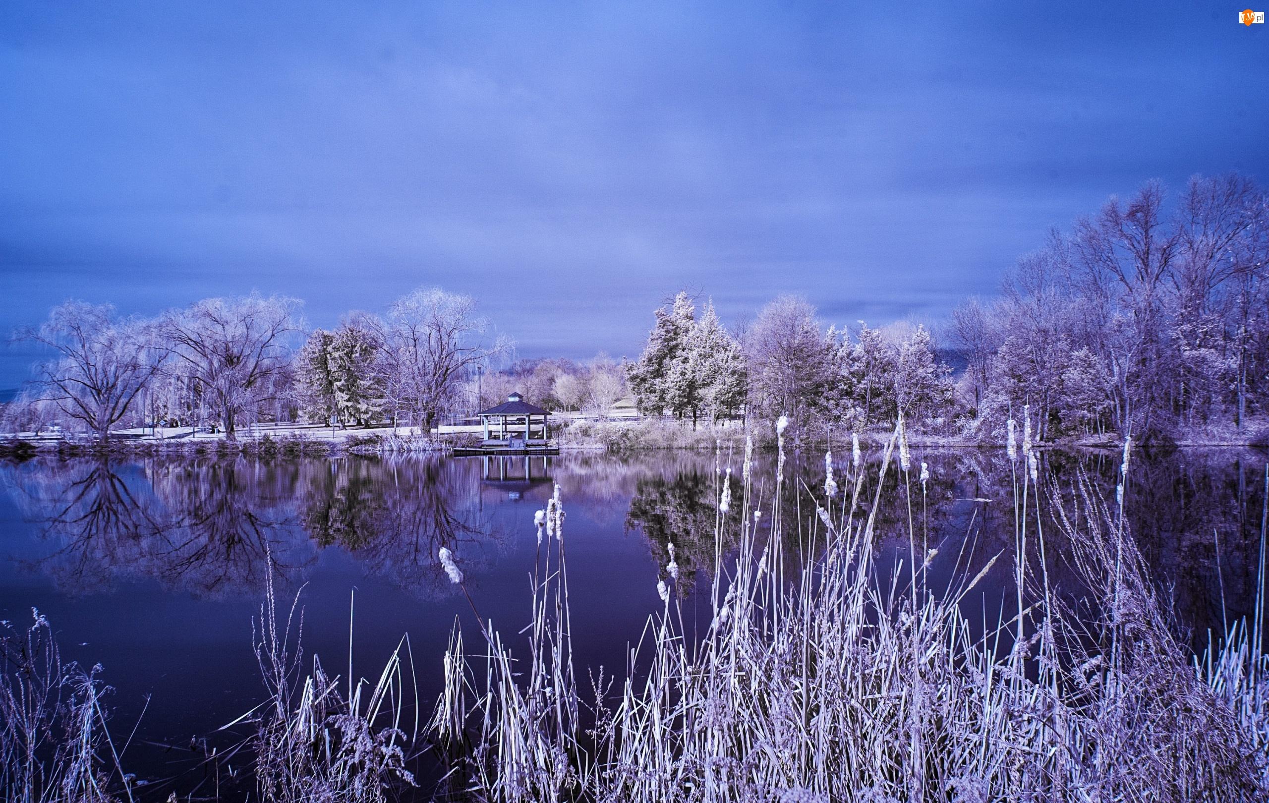 Jezioro, Śnieg, Drzewa, Tatarak