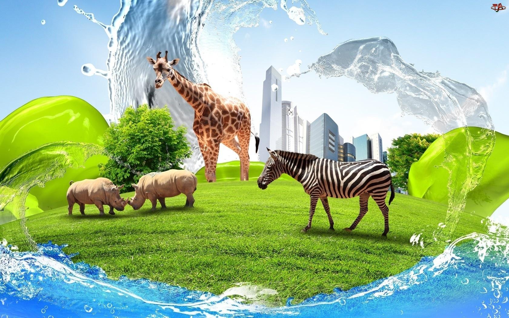 Nosorożce, Chmur, Zebra, Trawa, Żyrafa, Drapacze