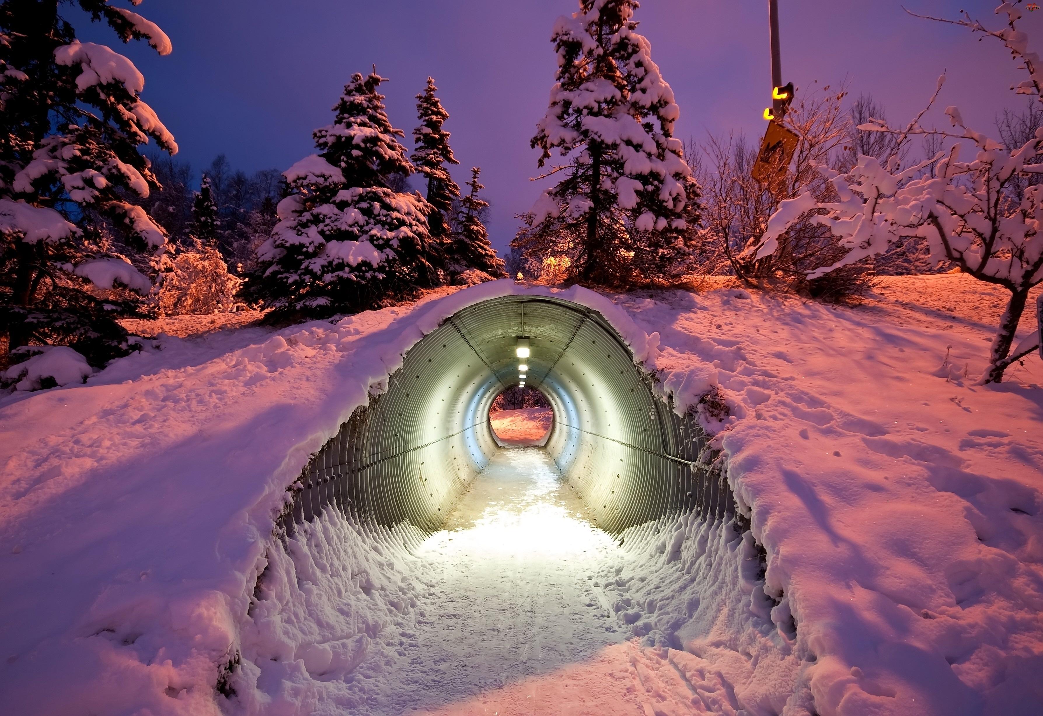 Drzewa, Zmierzch, Tunel, Śnieg