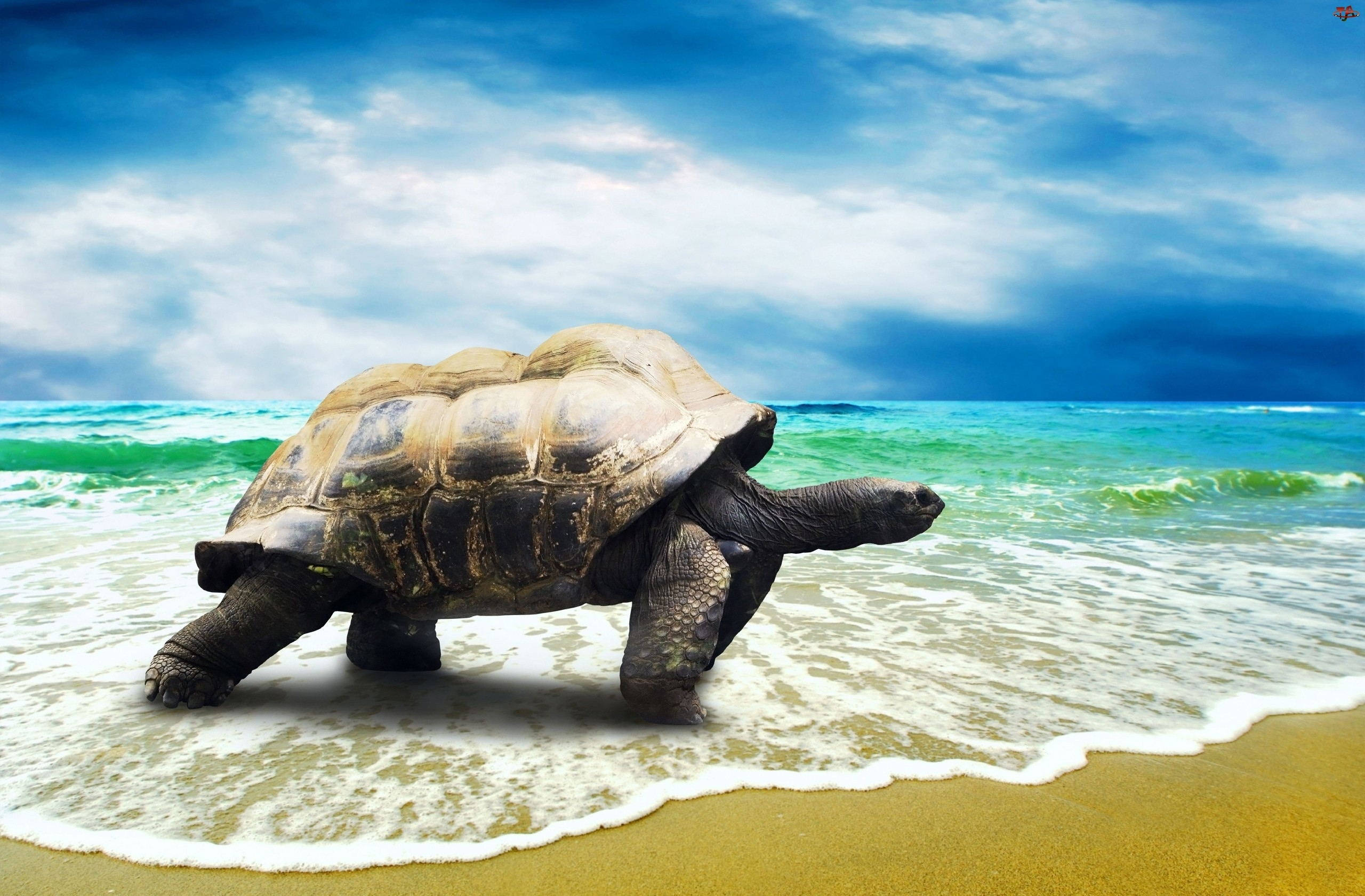 Żółw, Niebo, Morze, Fale