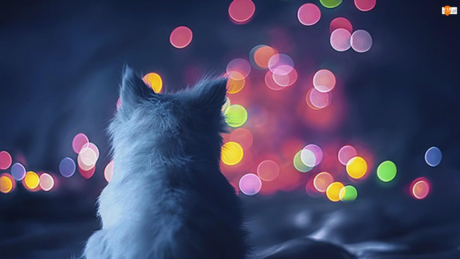 Kule, Kot, Kolorowe