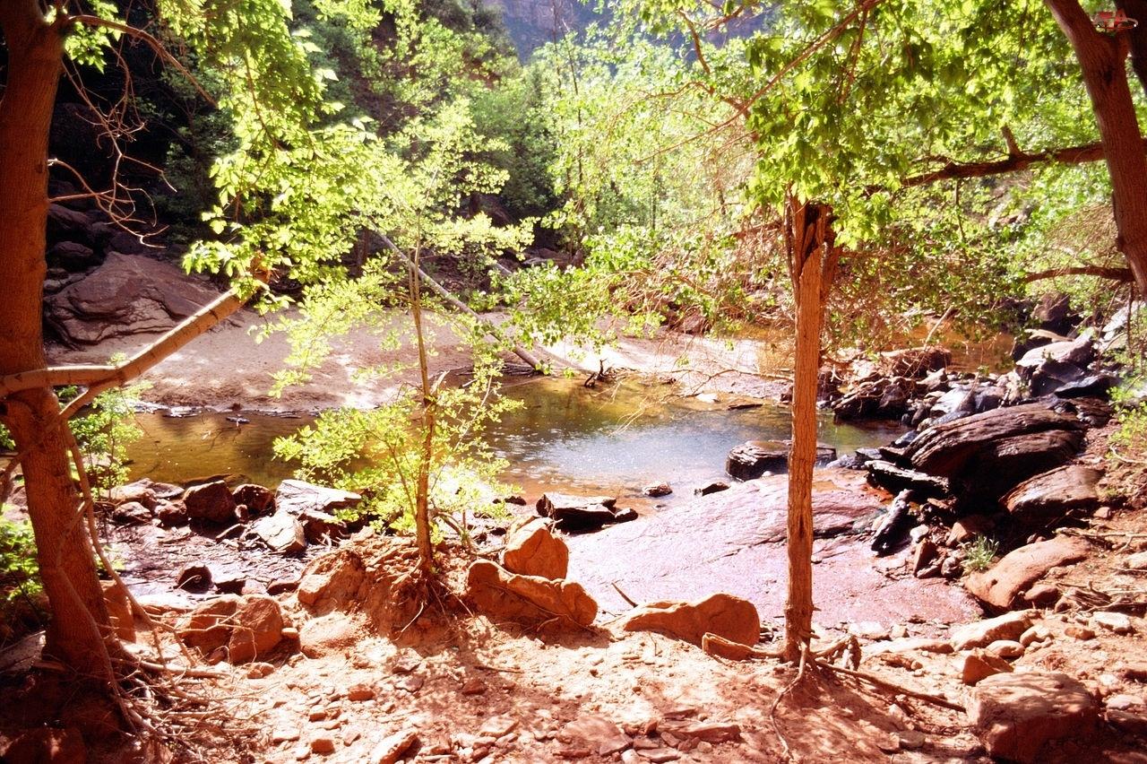 Utah, Rzeka, Drzewa, Kamienie, Zion