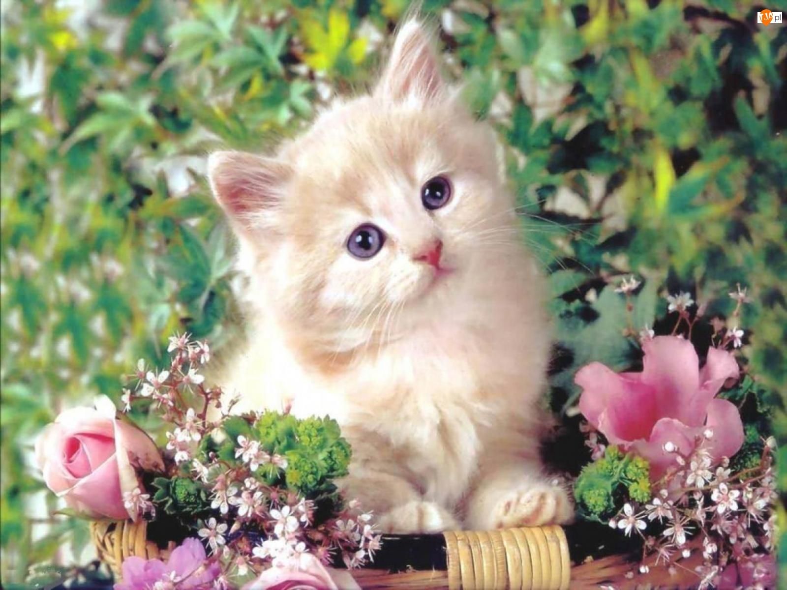 Kwiatki, Biały, Kotek