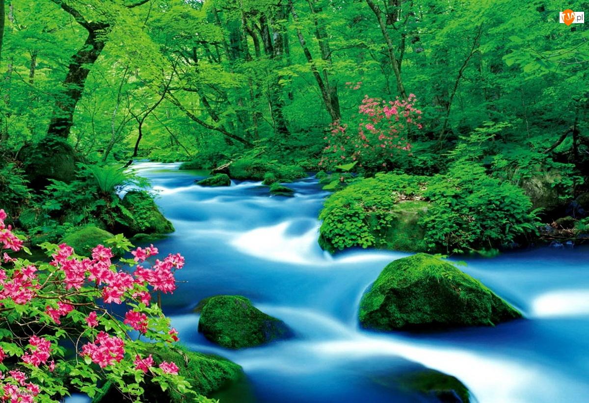 Kwiaty, Las, Rzeka