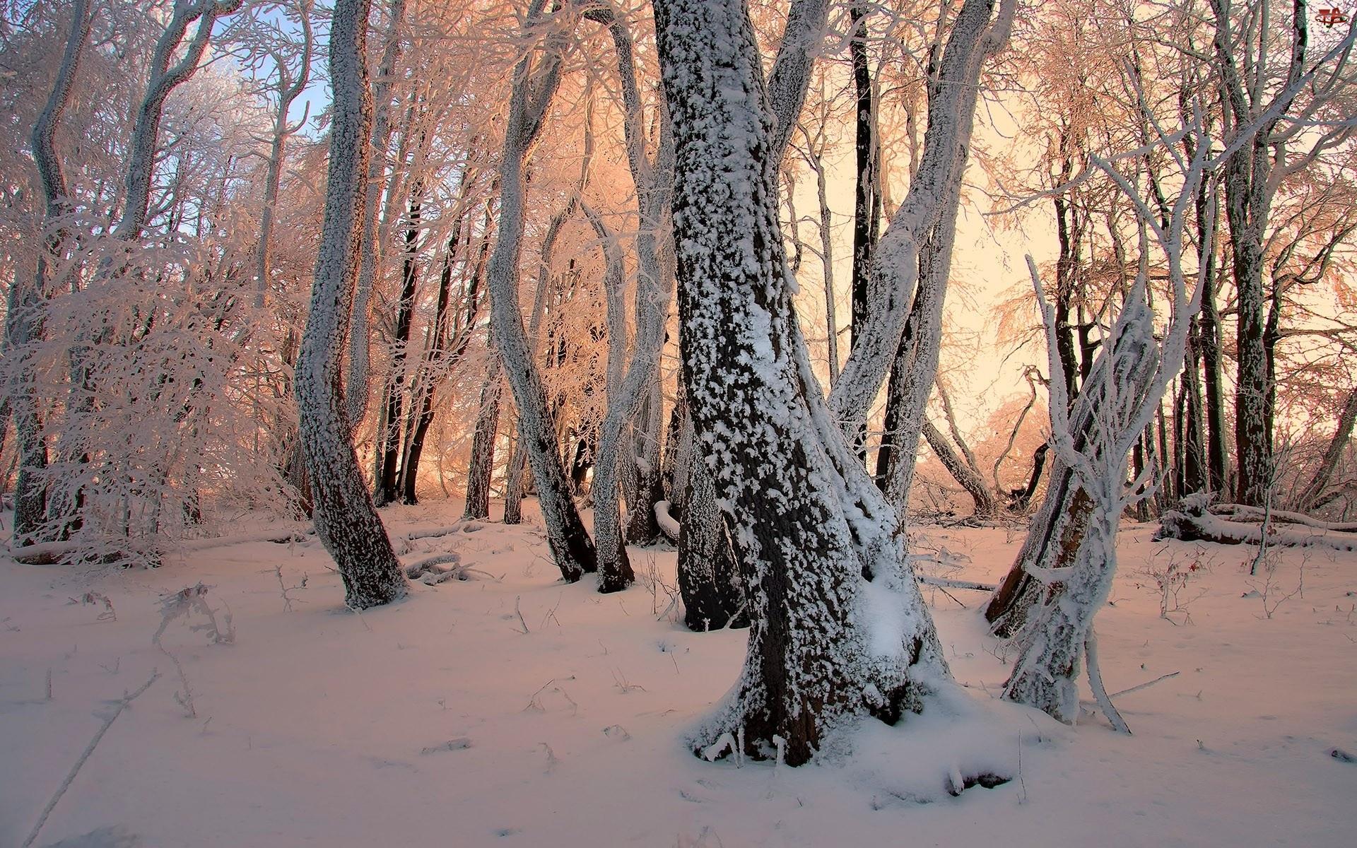 Zima, Przebijające Światło, Ośnieżone, Drzewa