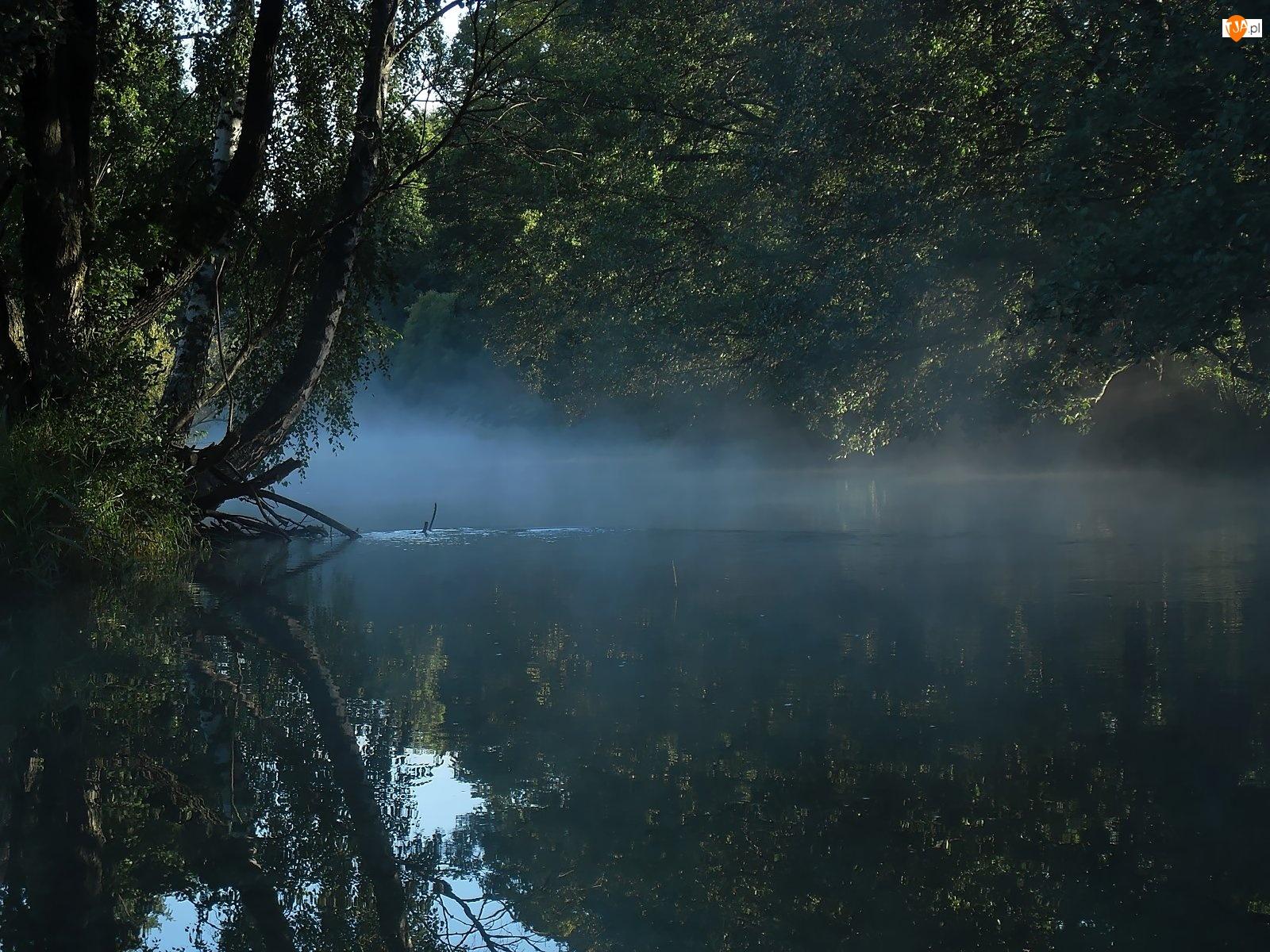 Rzeka, Liście, Mgła, Brzoza