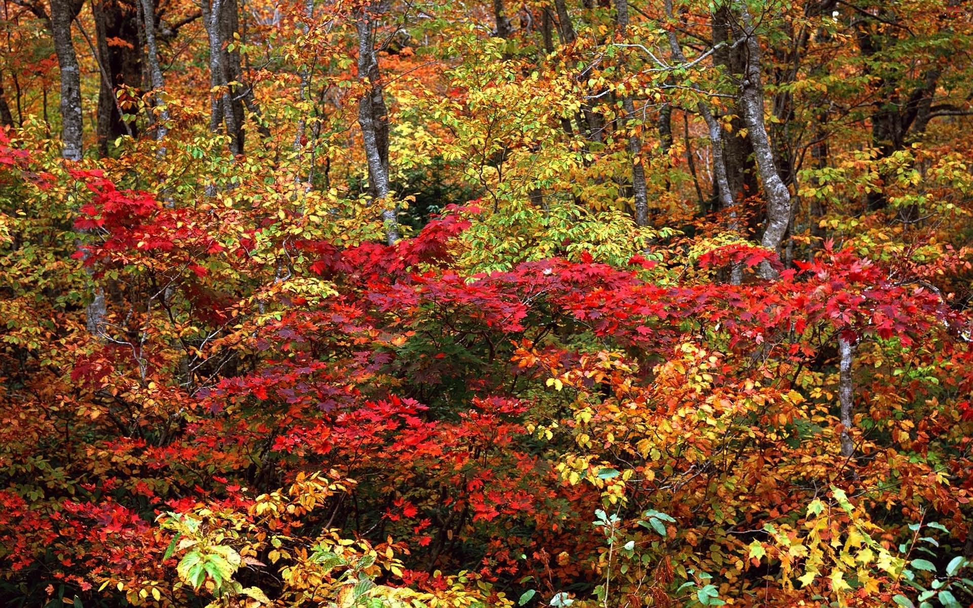 Jesień, Krzewy, Drzewa