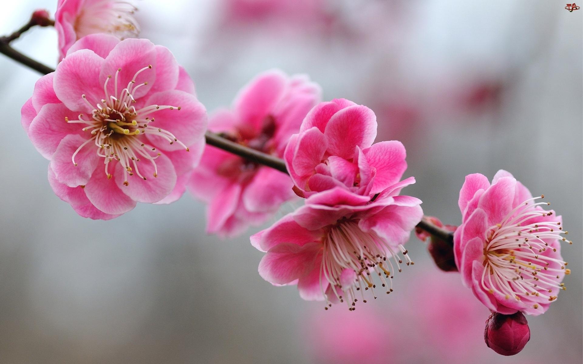 Kwiaty, Drzewo, Gałąź