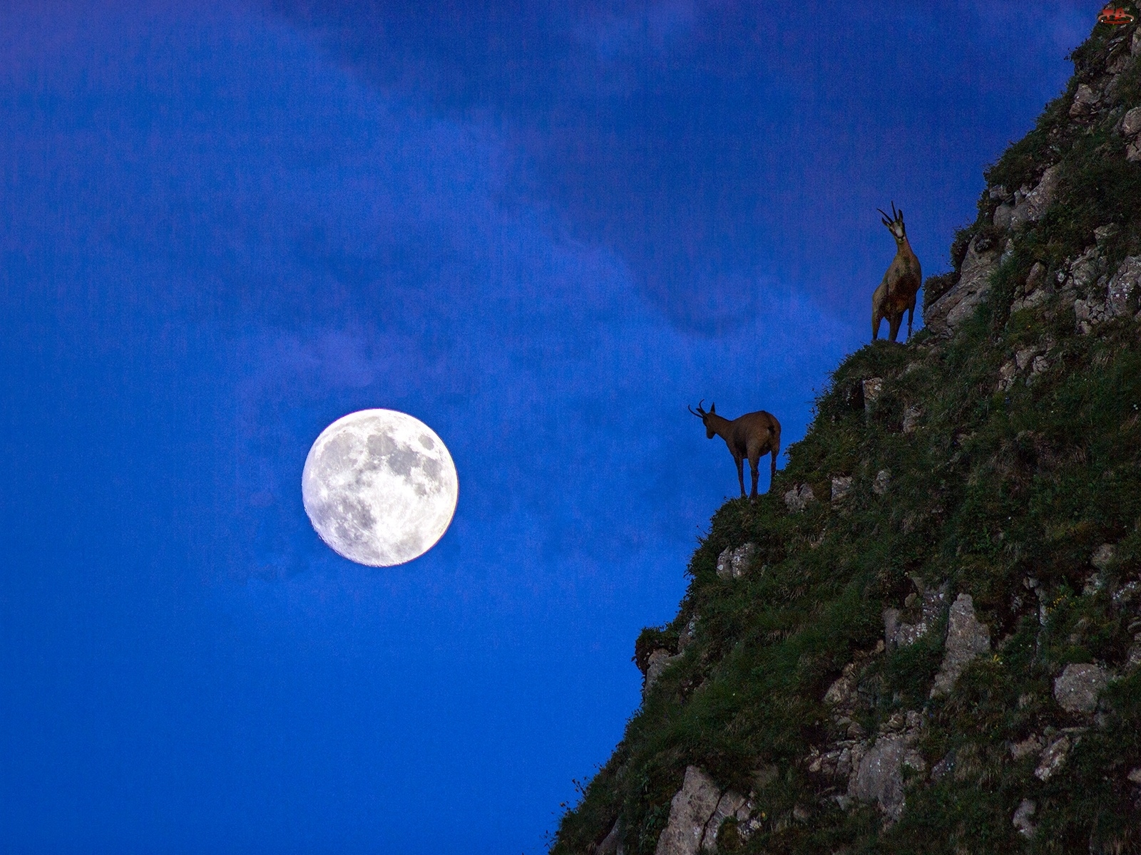 Kozy, Księżyc, Góry