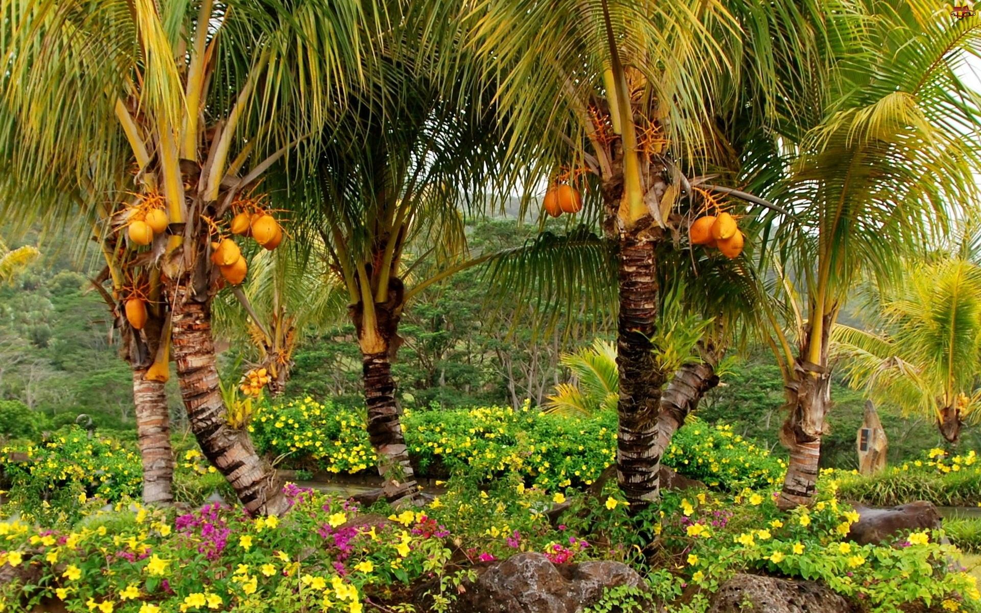 Kwiaty, Ogród, Kokosowy