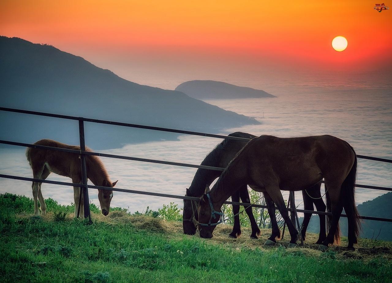 Morze, Zachód, Konie, Słońca, Skały, Trawa