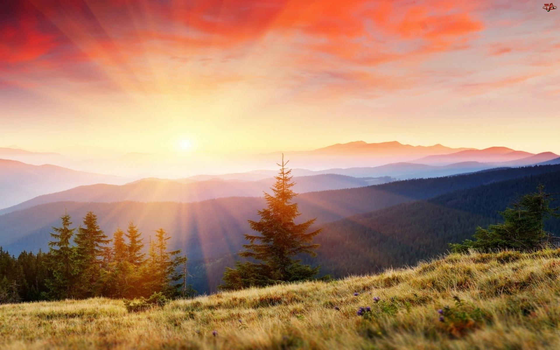 Łąka, Góry, Lasy