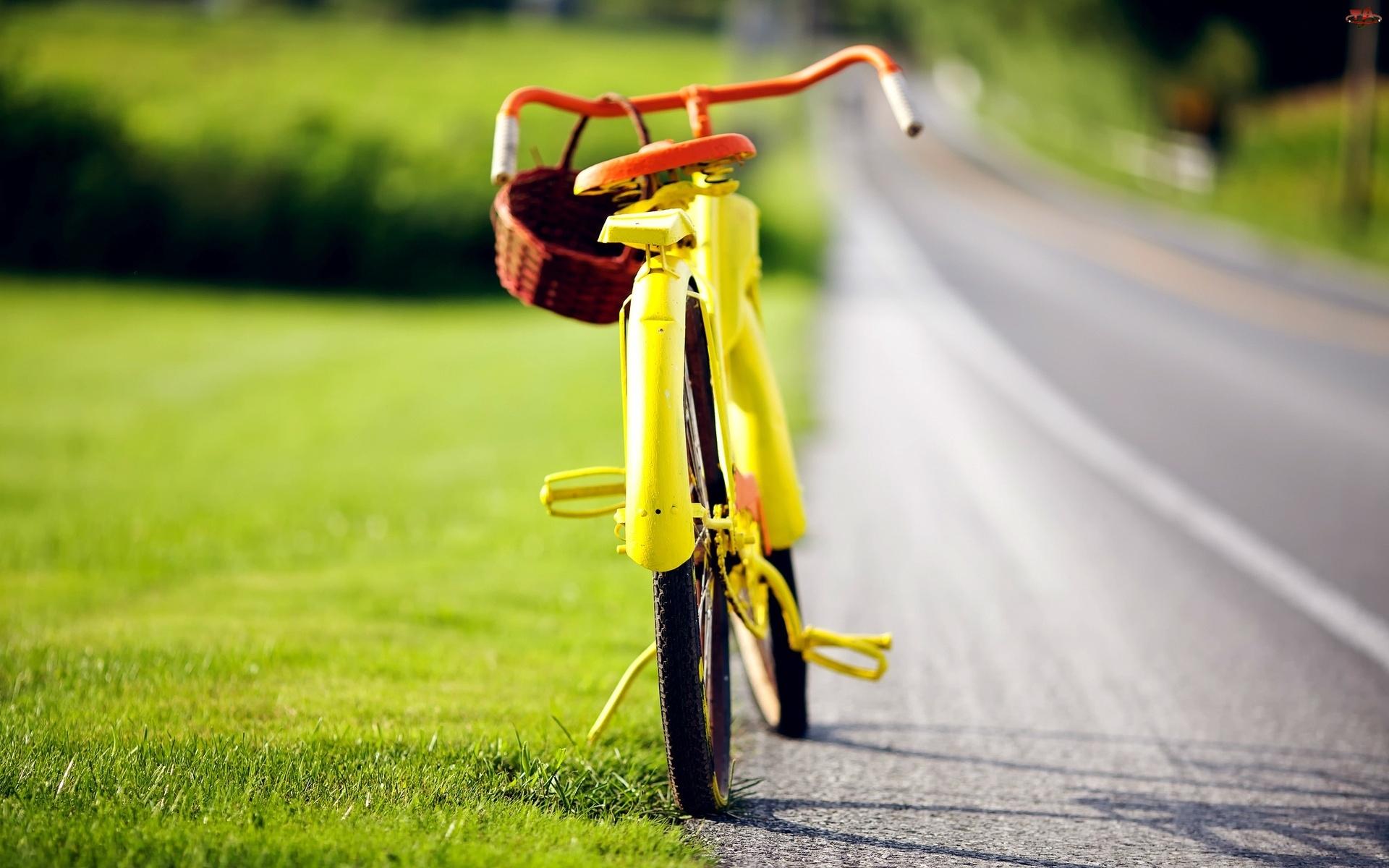 Rower, Grzybobranie, Droga, Koszyk