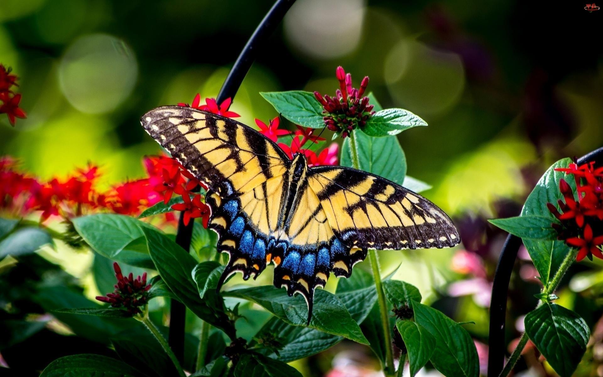 Kwiaty, Piękny, Motyl
