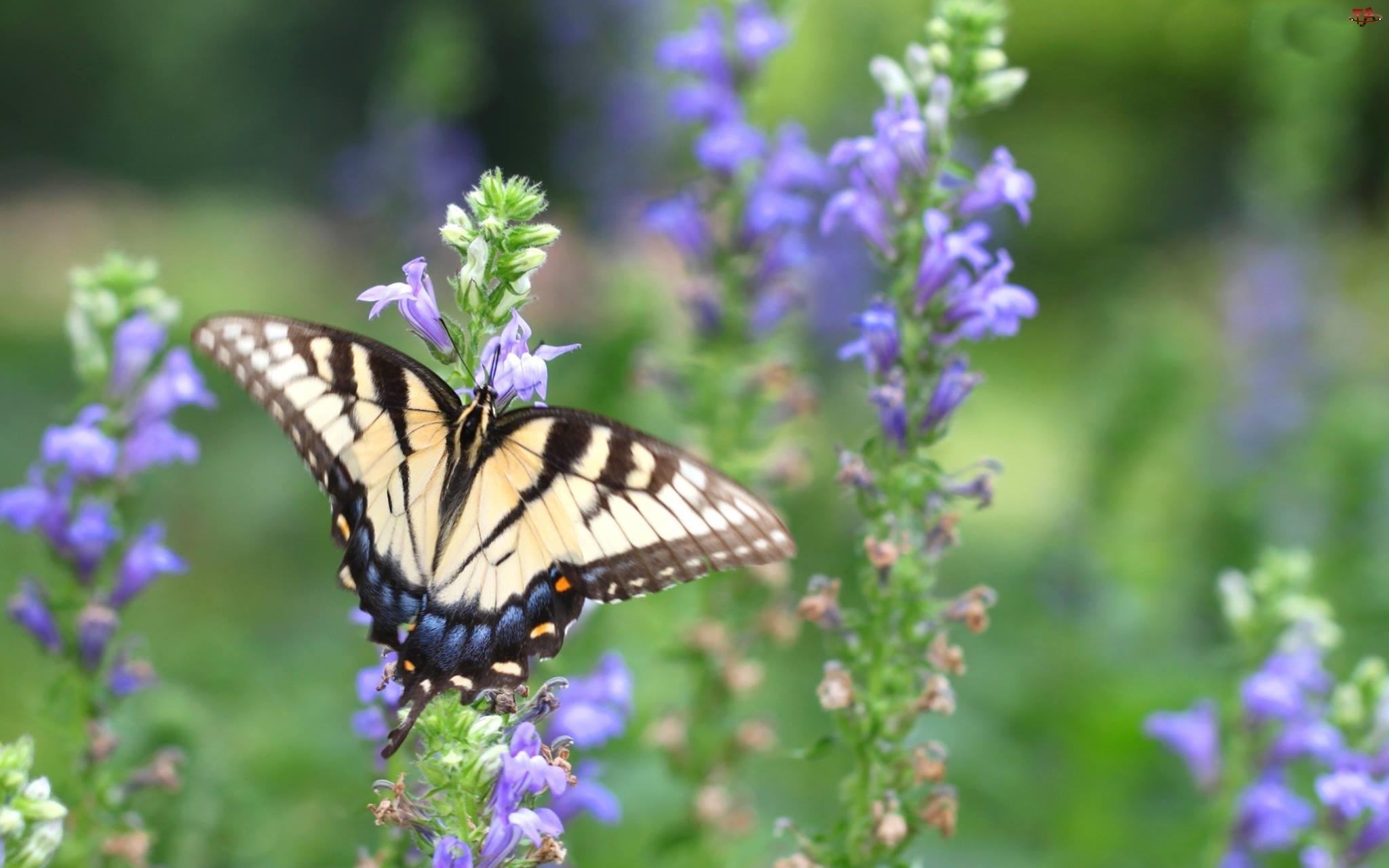 Kwiaty, Motyl, Fioletowe
