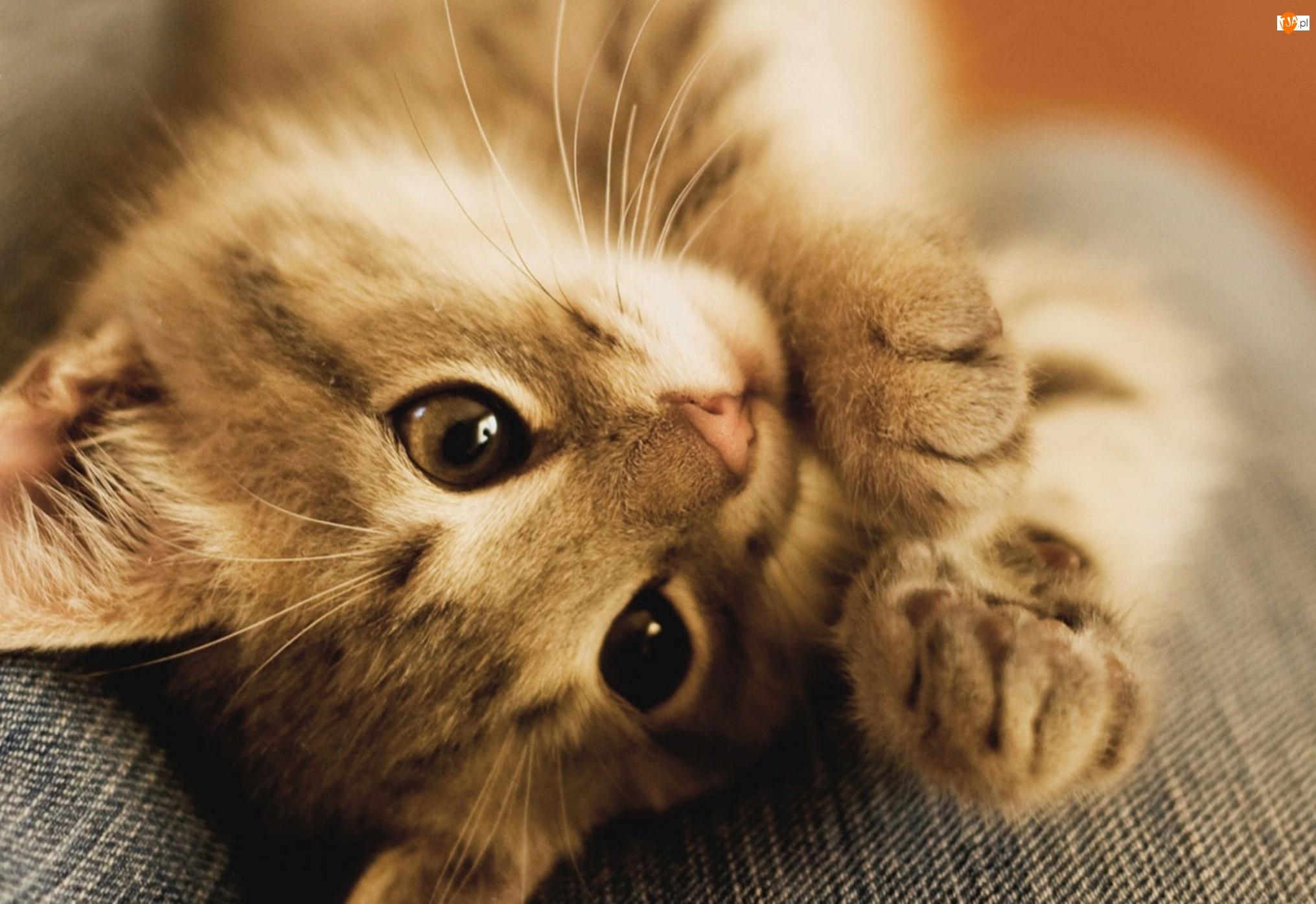 Kot, Słodkie, Łapki, Oczy