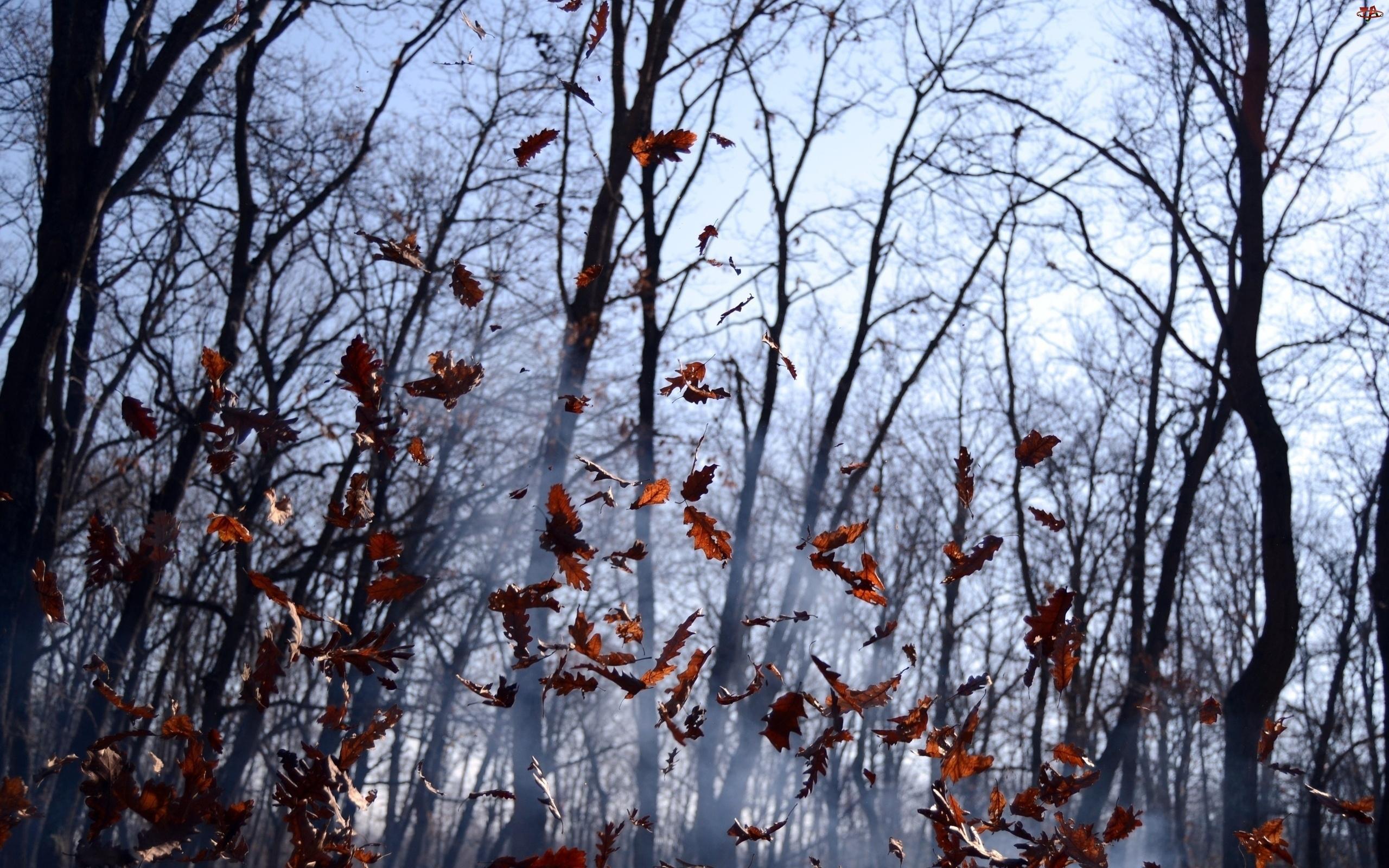 Jesień, Las, Liście, Opadające, Mgła